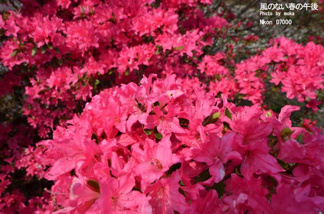 20110430_ashikaga-flowerpar.jpg