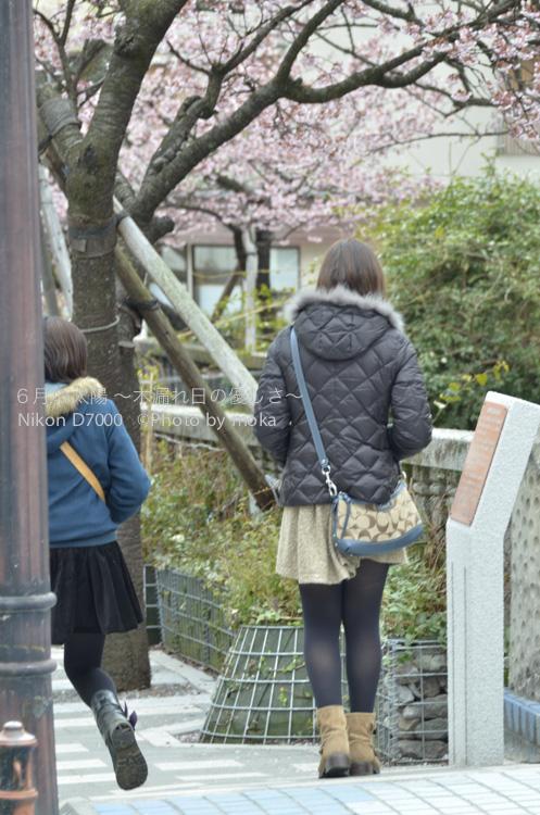 20130222-23_izu106.jpg
