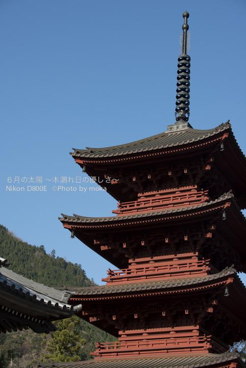 20130326_minobusan-kuonji037.jpg