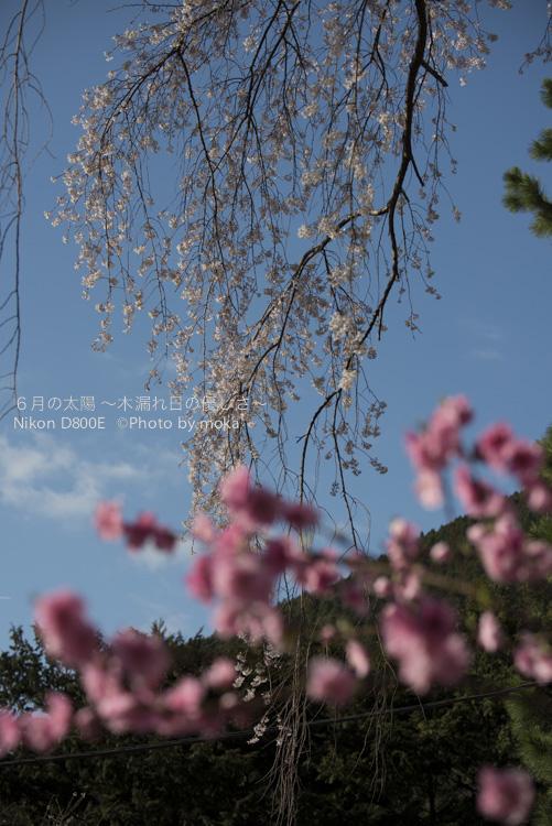 20130326_minobusan-kuonji064.jpg