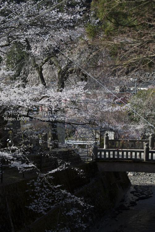 20130326_minobusan-kuonji068.jpg