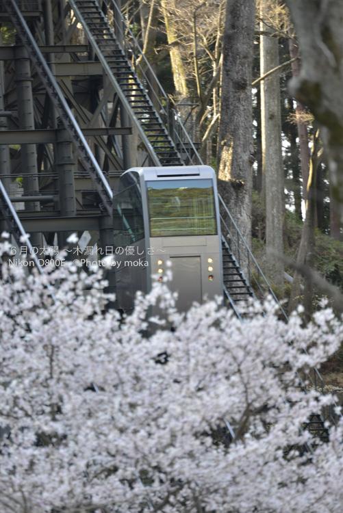 20130326_minobusan-kuonji072.jpg