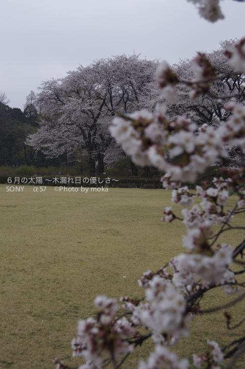 20130327_jindaiji094.jpg