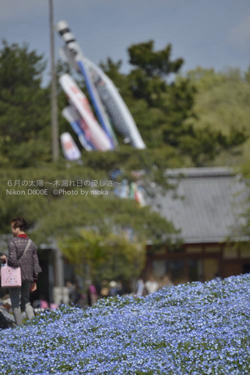 20130427_hitachinaka055.jpg