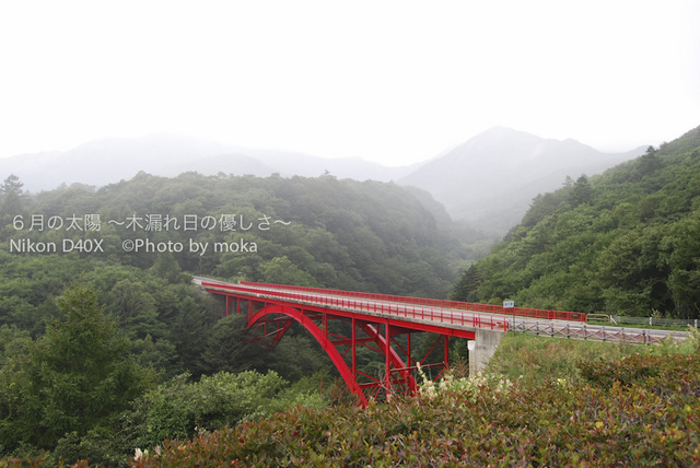 090821_yatugatake0113.jpg