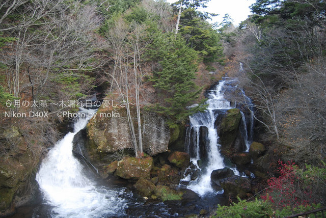 20081102_nikkou02.jpg