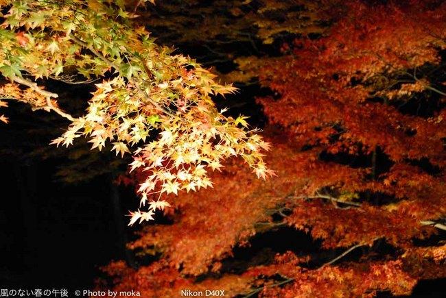 20091031-1101_ikaho35.jpg