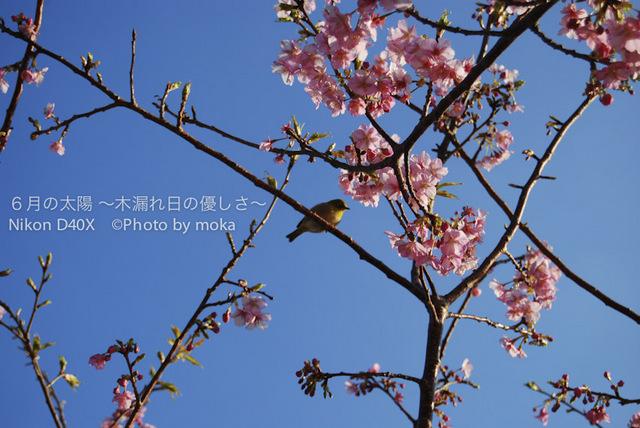 20100219-0220_nishiizu08.jpg