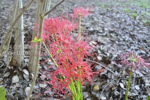 20101002_mizumoto-park11.jpg