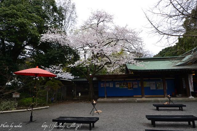 20110403_zenpukuji01.jpg