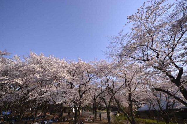 20110406_asukayama06.jpg
