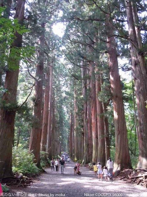 20110829-31_togakushi-adumino231.jpg