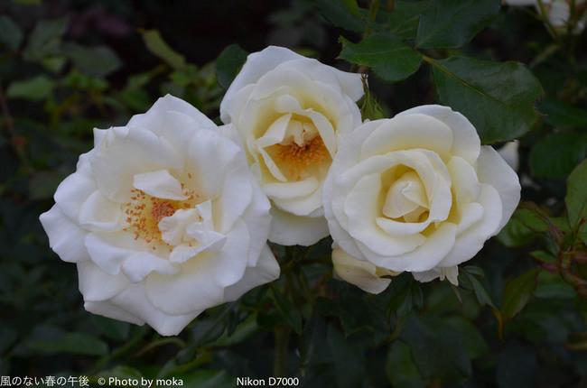 20111030_jindaiji038.jpg