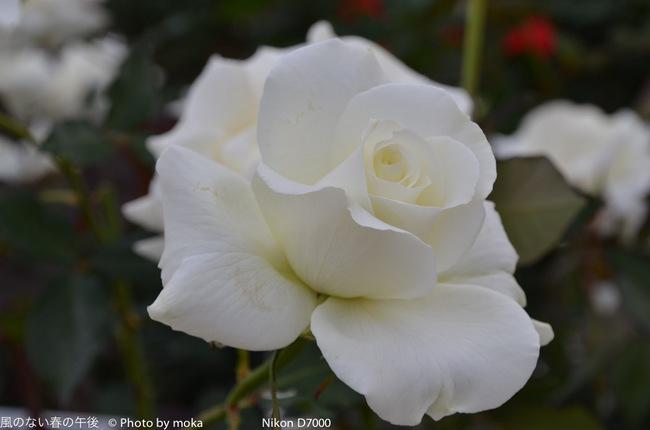 20111030_jindaiji043.jpg