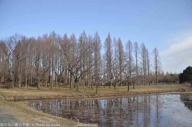 20120202_mizumoto-park01.jpg