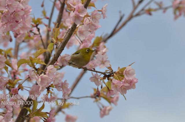 20120326_kasairinkai-park04.jpg