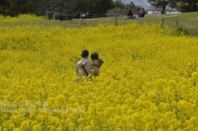 20120326_kasairinkai-park36.jpg