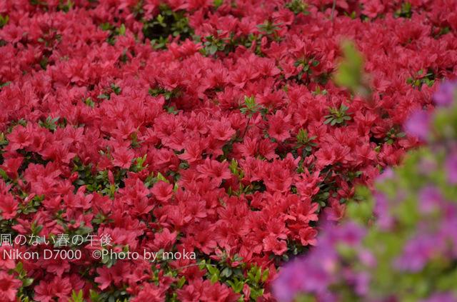 20120425_jindaiji08.jpg