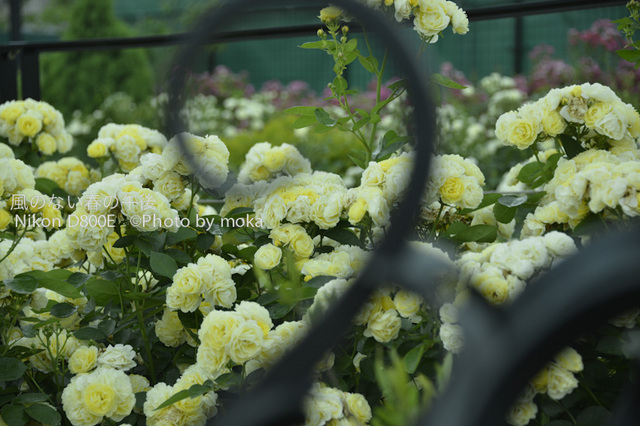 20120525_oujikamiya26.jpg