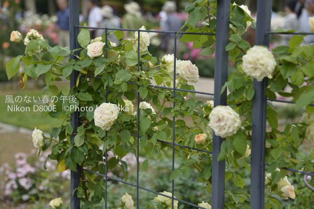 20120530_jindaiji019.jpg