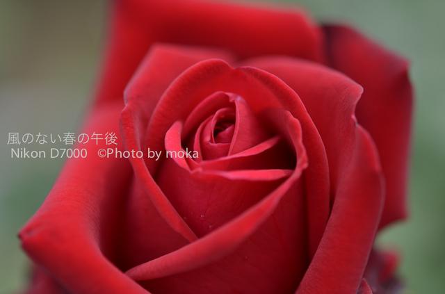 20120530_jindaiji094.jpg