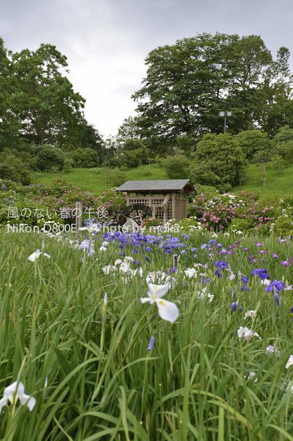 20120624_yokosuka09.jpg