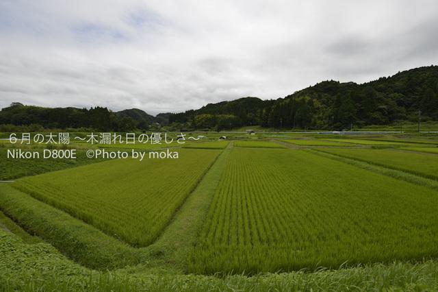 20120723_youroukeikoku01.jpg