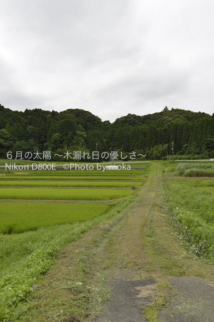 20120723_youroukeikoku02.jpg