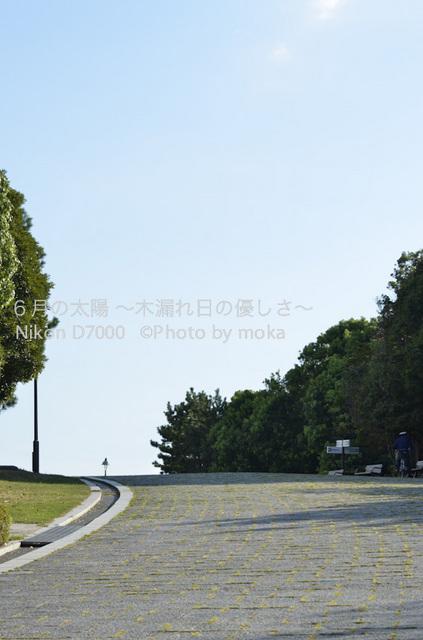 20120827_kasairinkai-park18.jpg