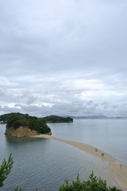 20120917-18_shodoshima61.jpg