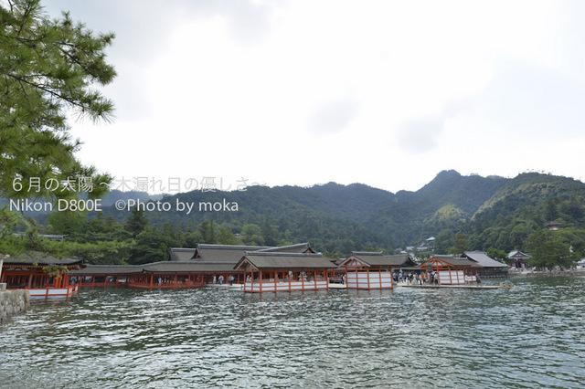 20120918_miyajima08.jpg