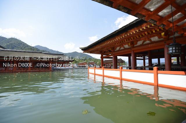 20120918_miyajima12.jpg