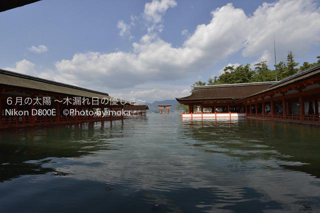 20120918_miyajima19.jpg