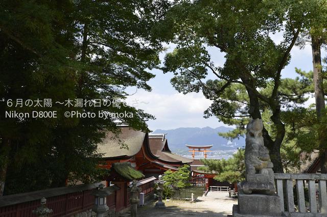 20120918_miyajima41.jpg