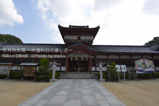 20120920-21_dogo46.jpg