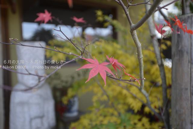 20121202_nagatoro21.jpg