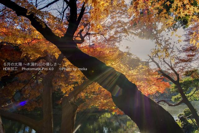 20121211_koishikawa-kourakuen11_-2_fused.jpg