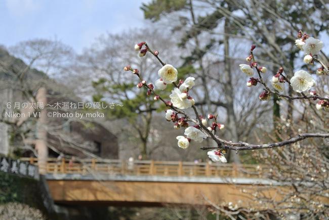 20130222-23_izu070.jpg