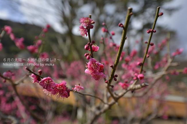 20130222-23_izu198.jpg
