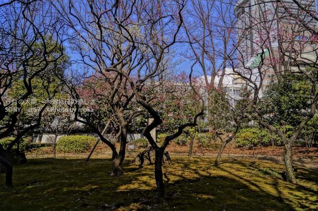 20130228_koishikawa-kourakuen65.jpg