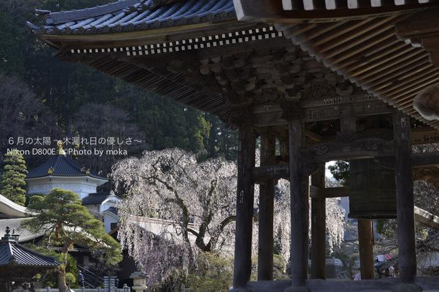 20130326_minobusan-kuonji055.jpg