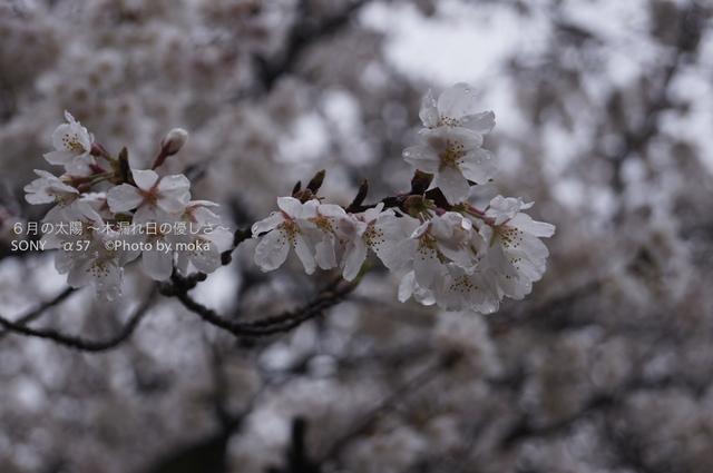 20130327_jindaiji068.jpg