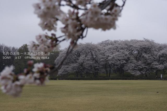 20130327_jindaiji092.jpg
