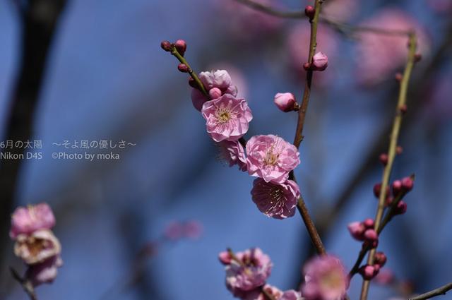 20160131_toshinogyou-park31.jpg