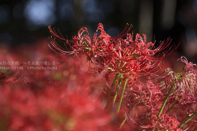 20160925_kinchakuda053.jpg