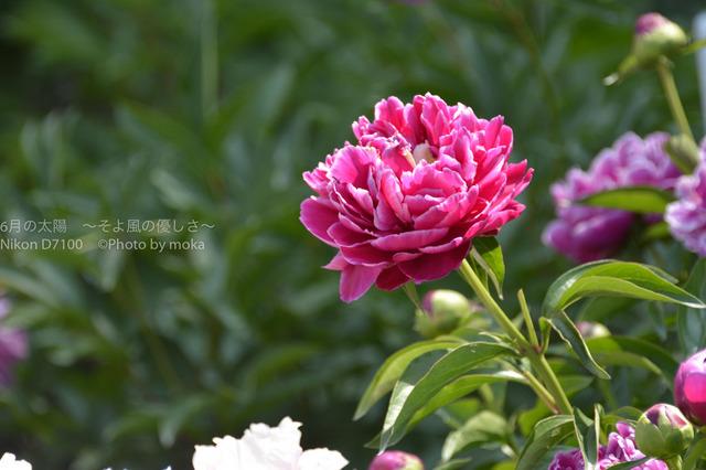 20170520_jindaiji088.jpg