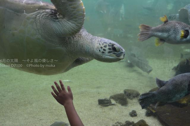 20170826_hakkeijima030.jpg