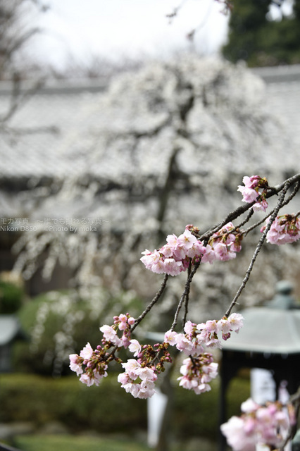 20180311_mitsuzouin10.jpg