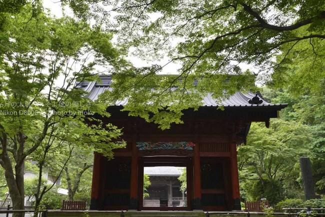 20120611_kamakura15.jpg