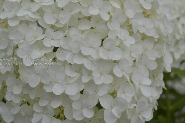 20120624_kamakura-y68.jpg